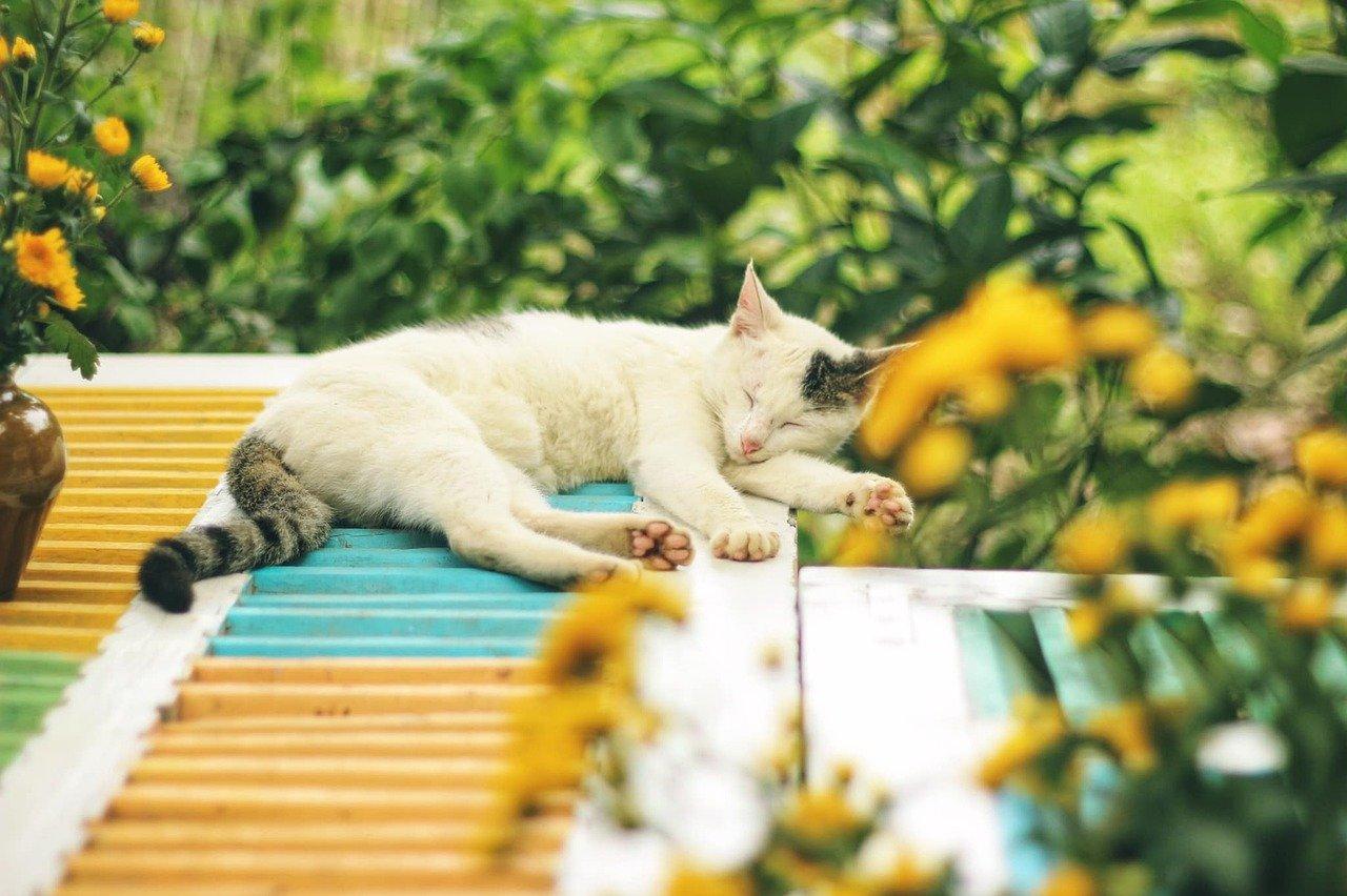 sleepy-female-cat-names