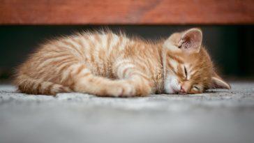 unisex-sleepy-cat-names
