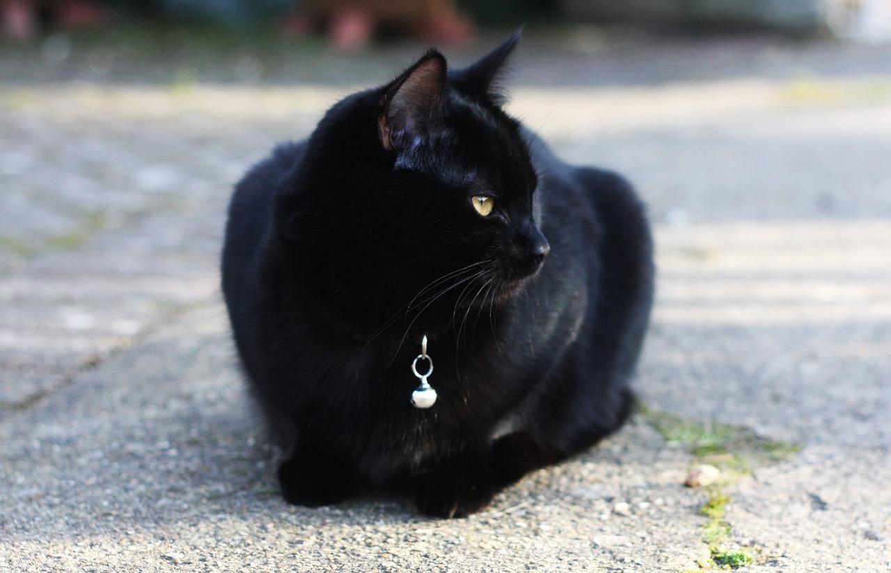 harry-potter-male-cat-names