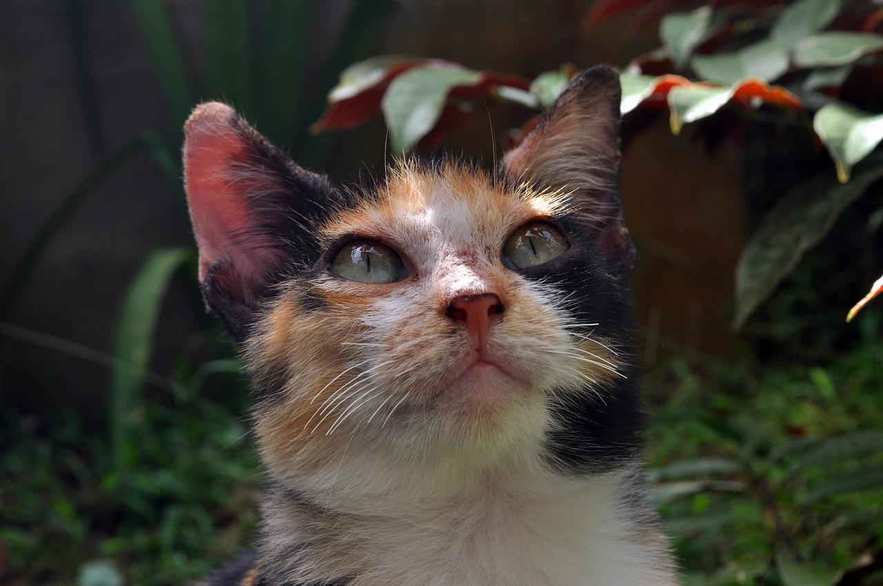 harry-potter-female-cat-names