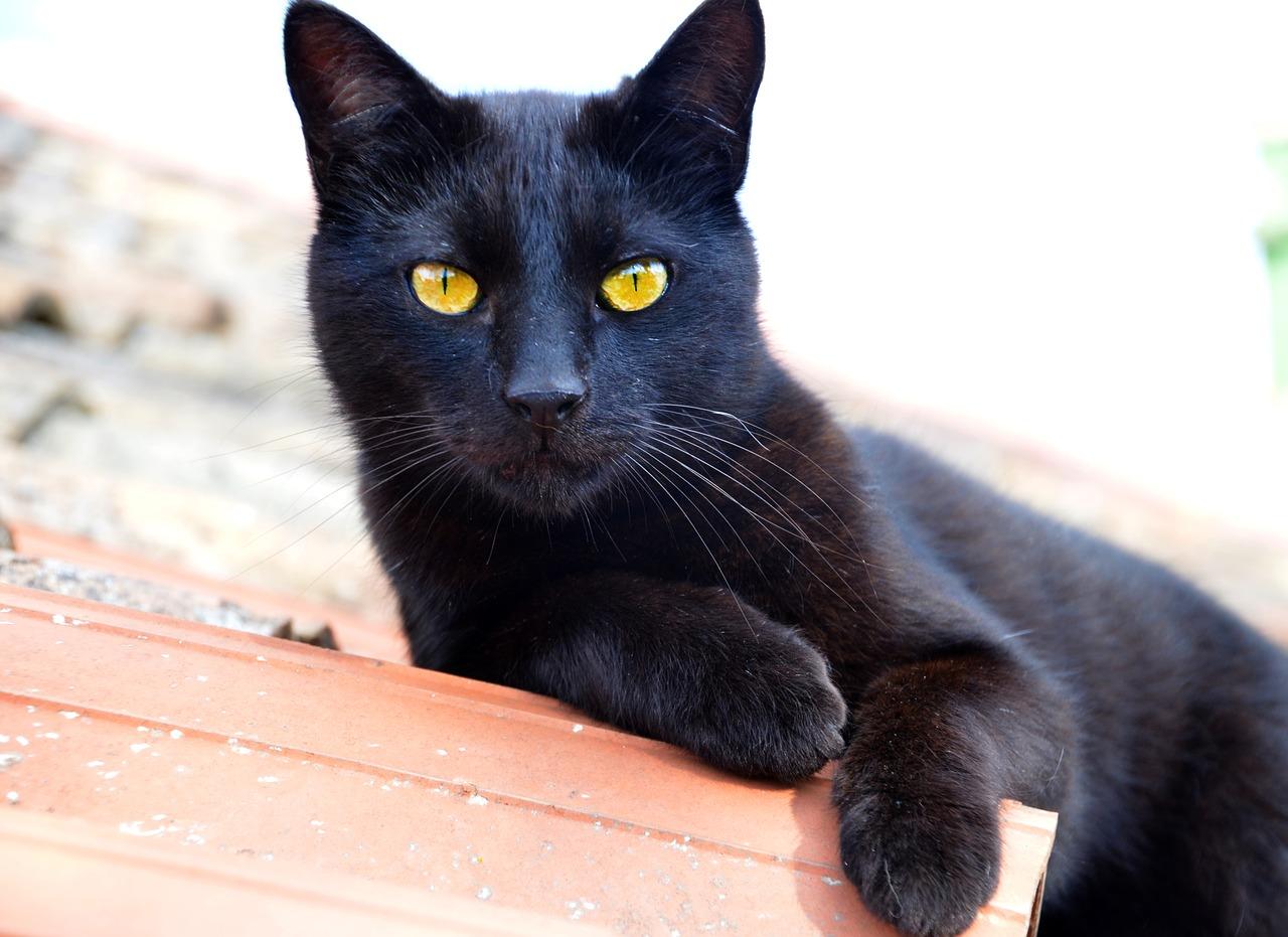 unisex-harry-potter-cat-names