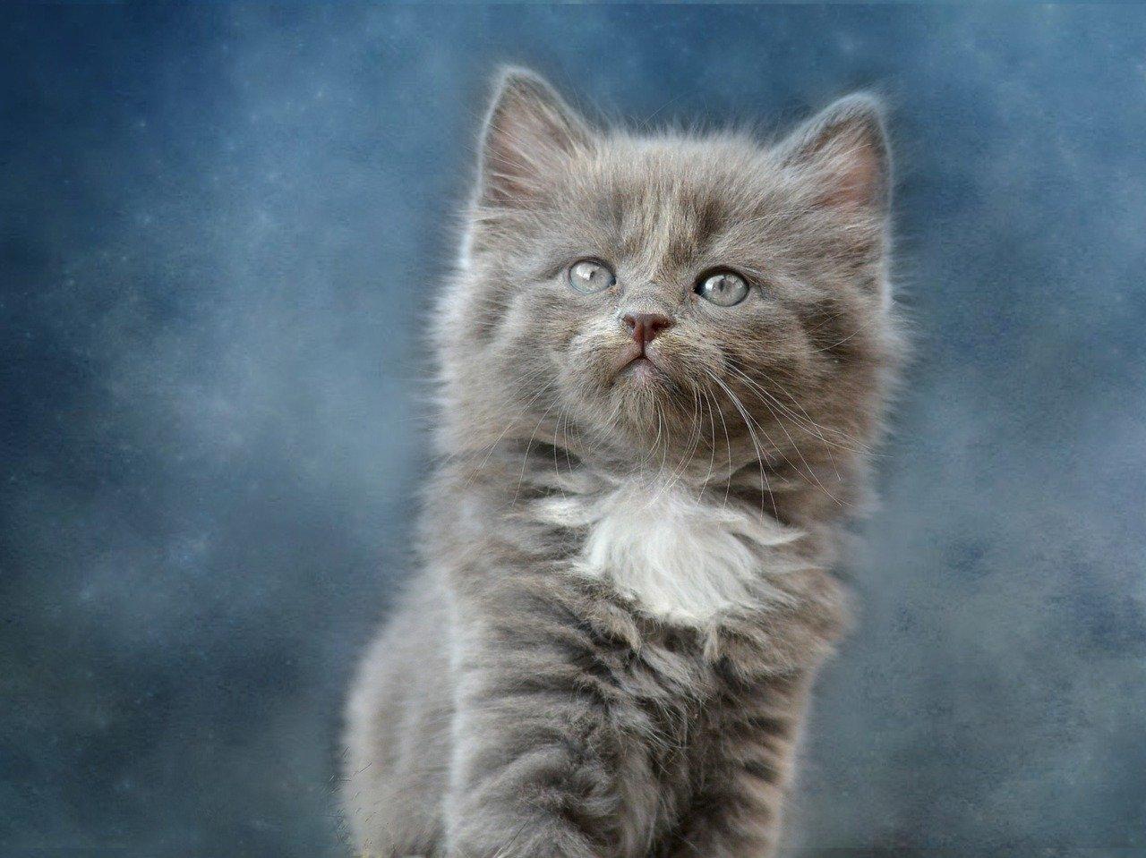 cute-unisex -cat-names