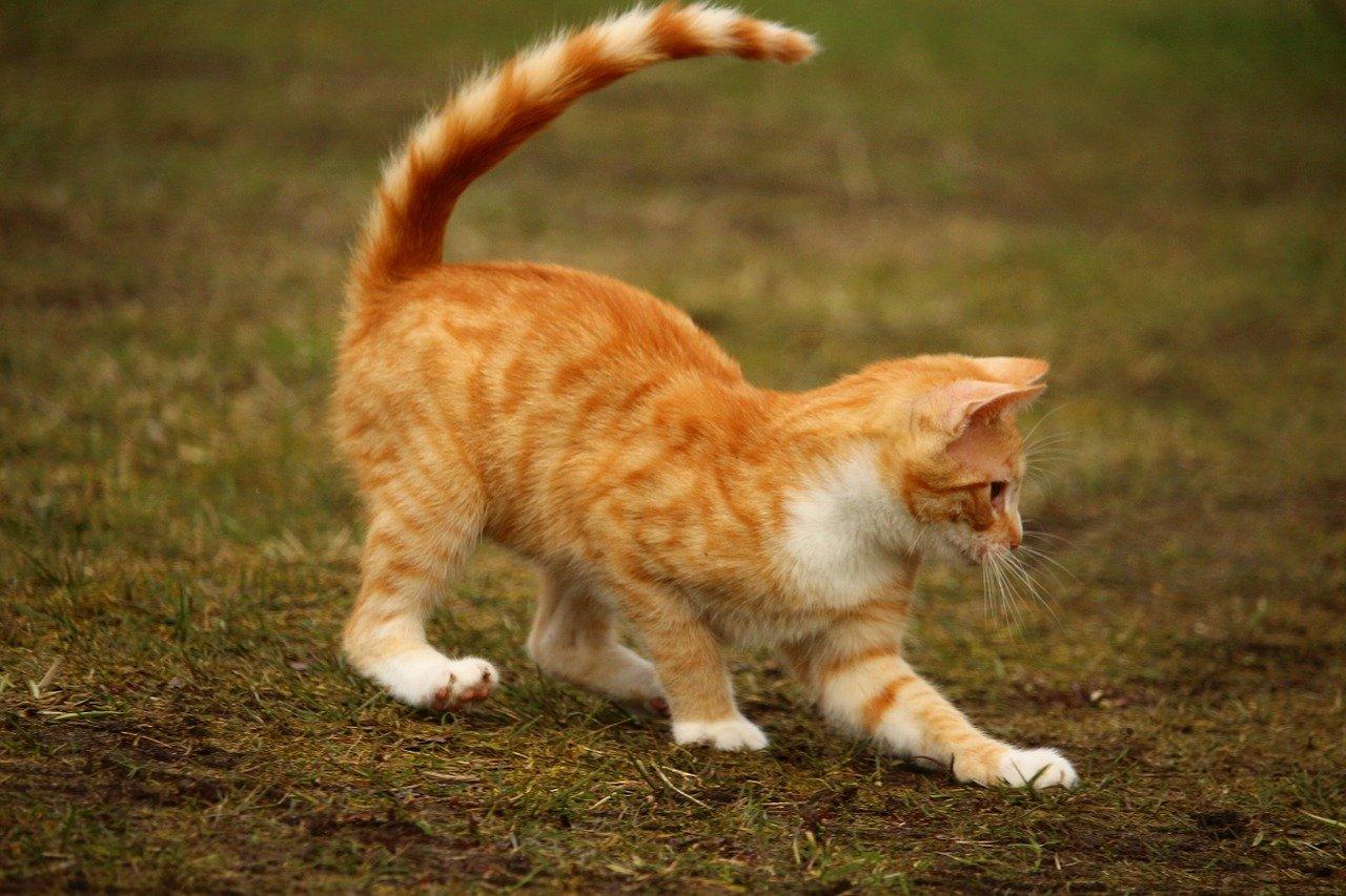 funny-unisex-cat-names
