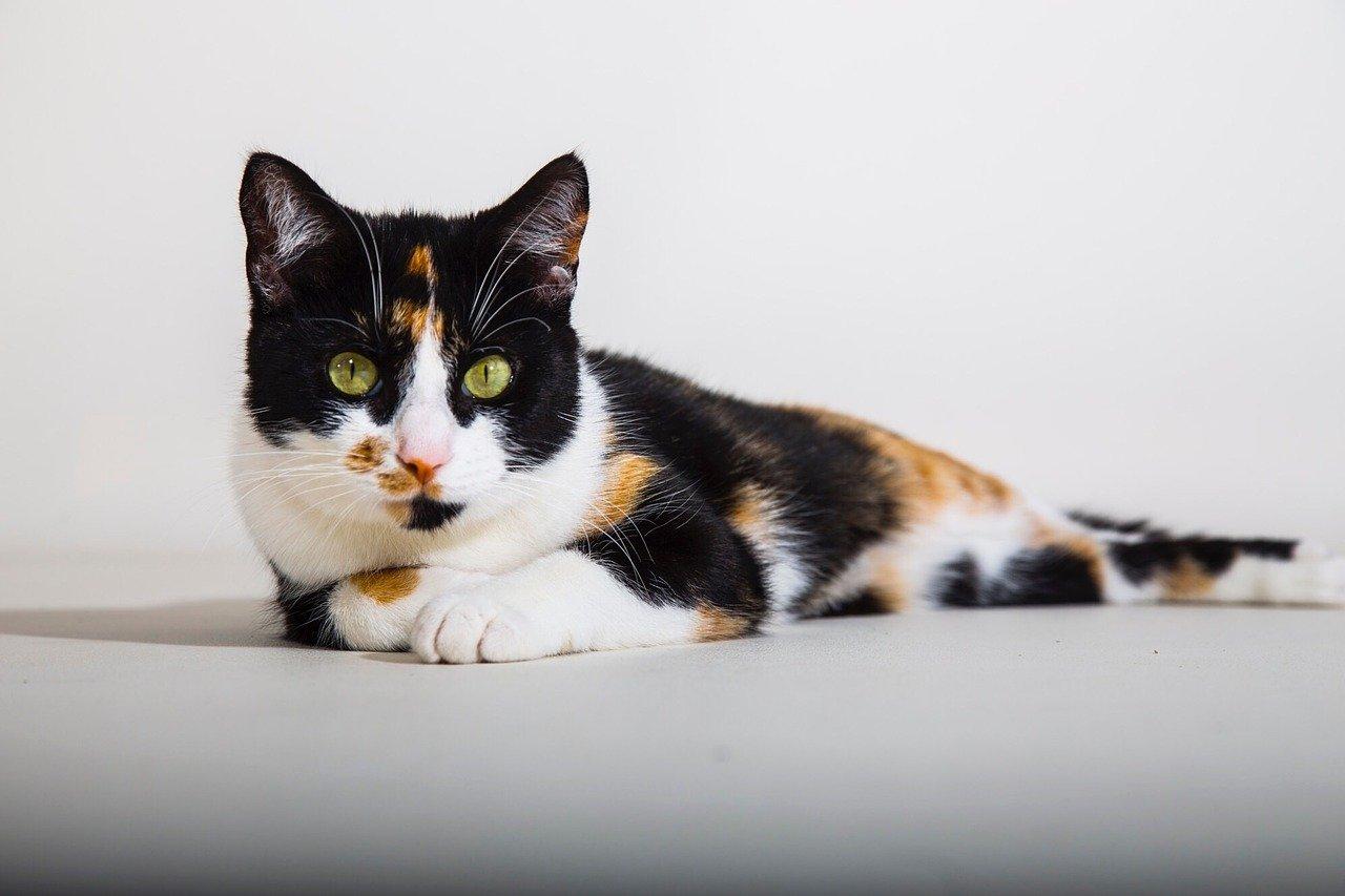 calico-unisex-cat-names