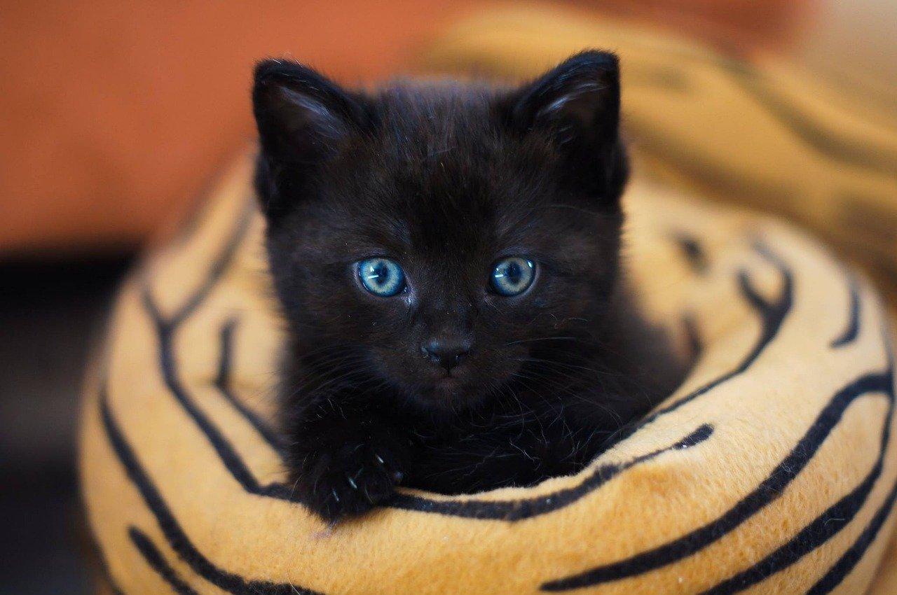 black-unisex-cat-names