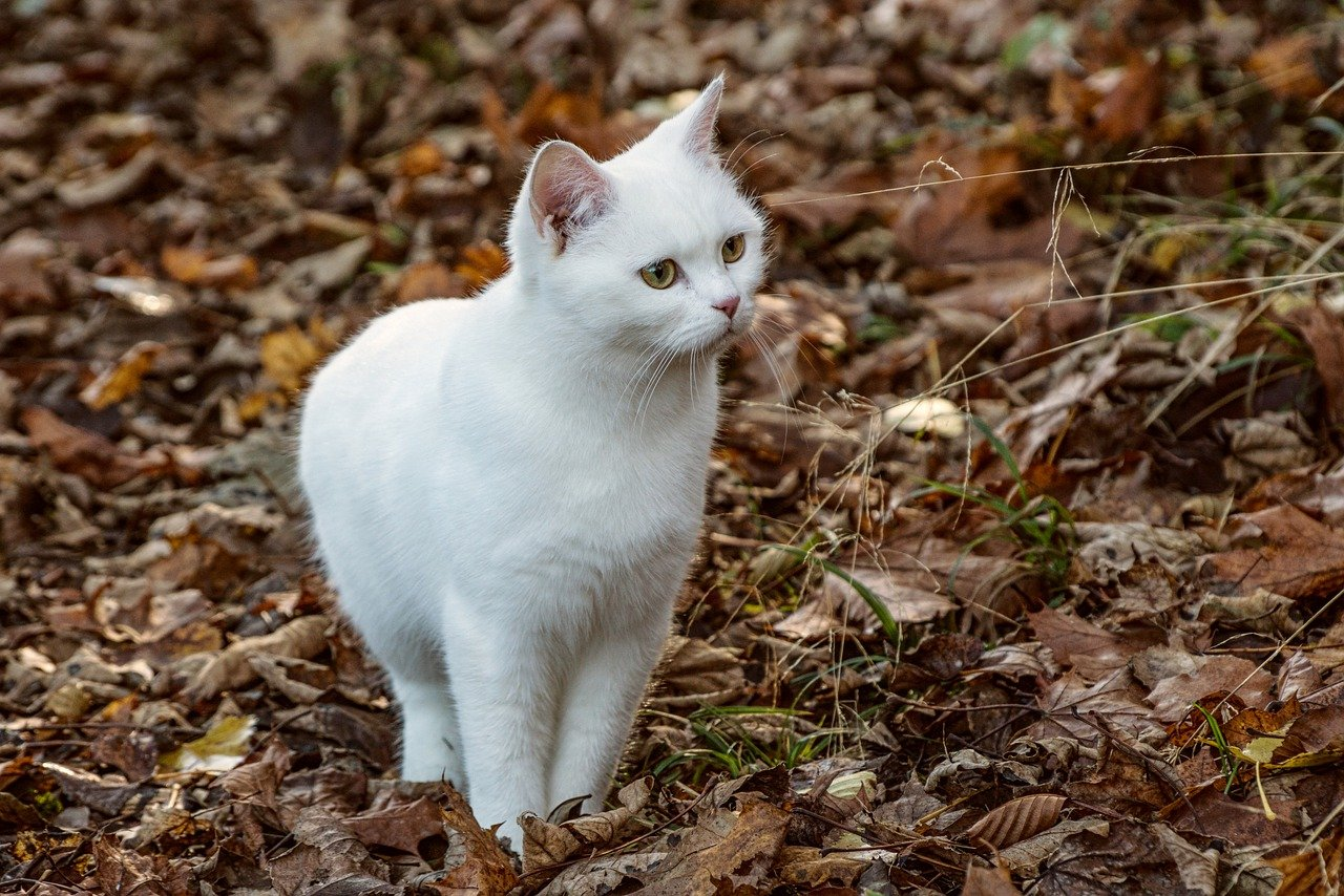 white-unisex-cat-names