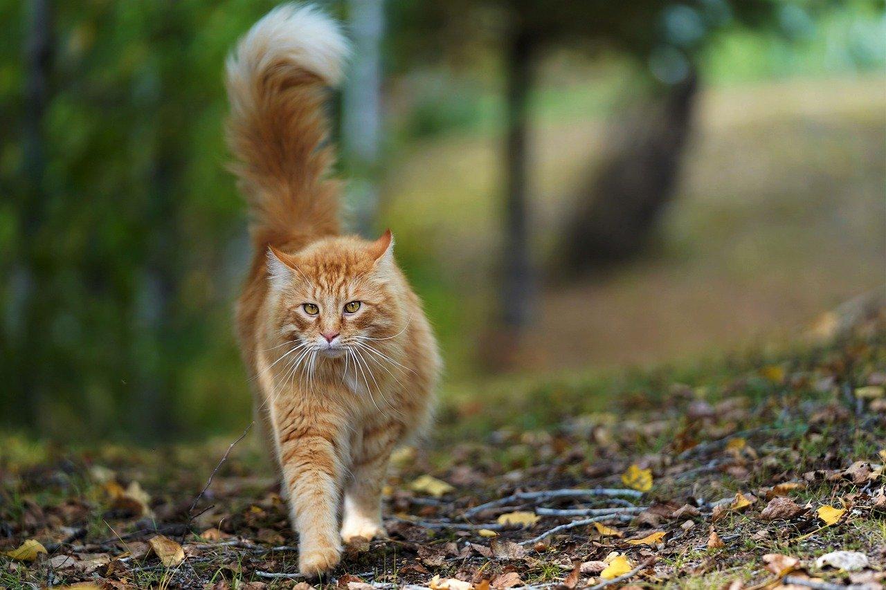 orange- unisex-cat-names