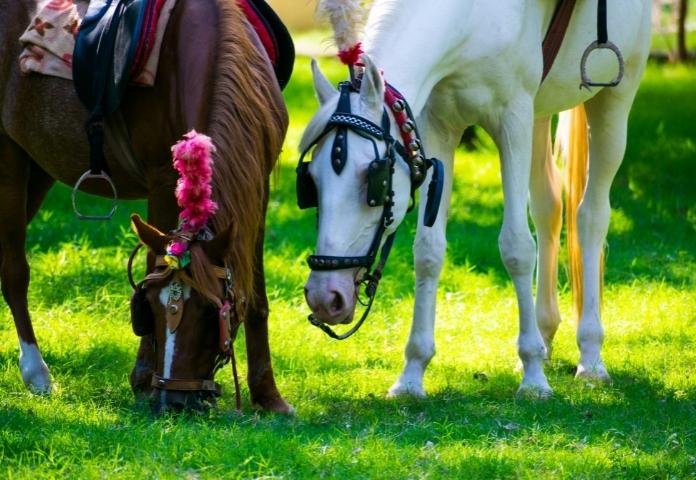 Best Punjabi Horse Names