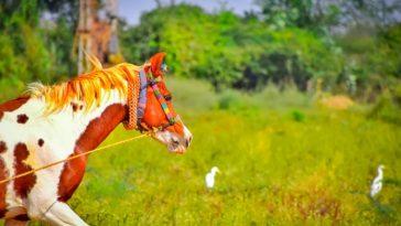 70+ Punjabi Horse Names - The Best Horse Names in Punjabi