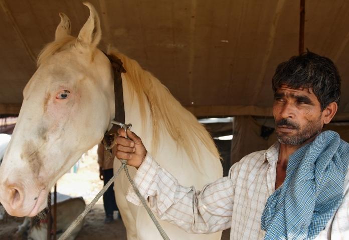 Male Hindi Horse Names
