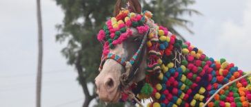 Top 70 Hindi Horse Names - The Best Horse names in Hindi