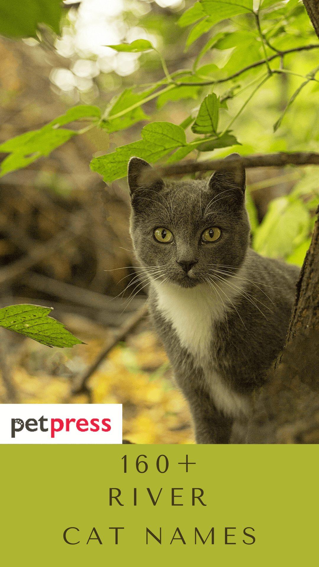 river-cat-names
