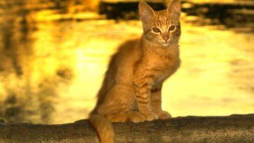 female-river-cat-names
