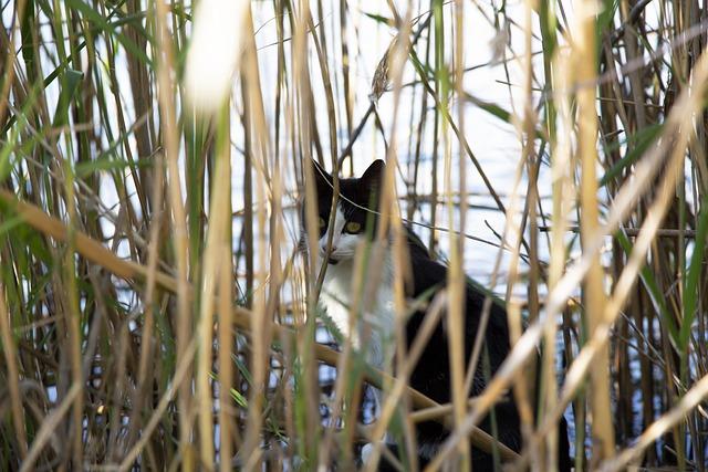 unisex-river-cat-names