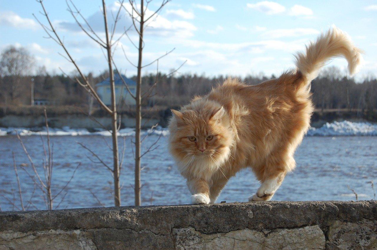 cute-river-cat-names