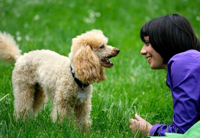 7 Ways to Celebrate National Dog Week (From Monday to Sunday)