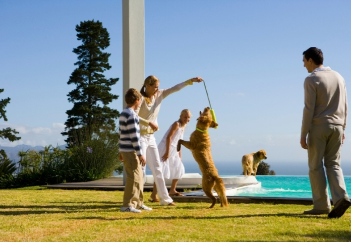Plan a doggie play activity with the fam (Friday)