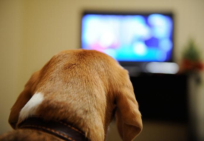 Watch a Dog-Themed Movie(Sunday)
