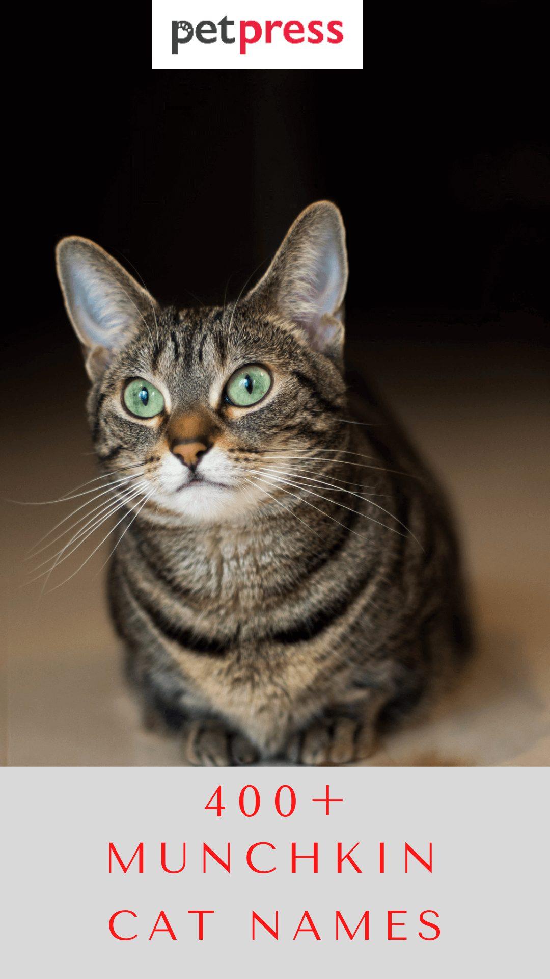 munchkin-cat-names