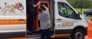 ASPCA assists evacuating affect dogs of Hurricane Ida
