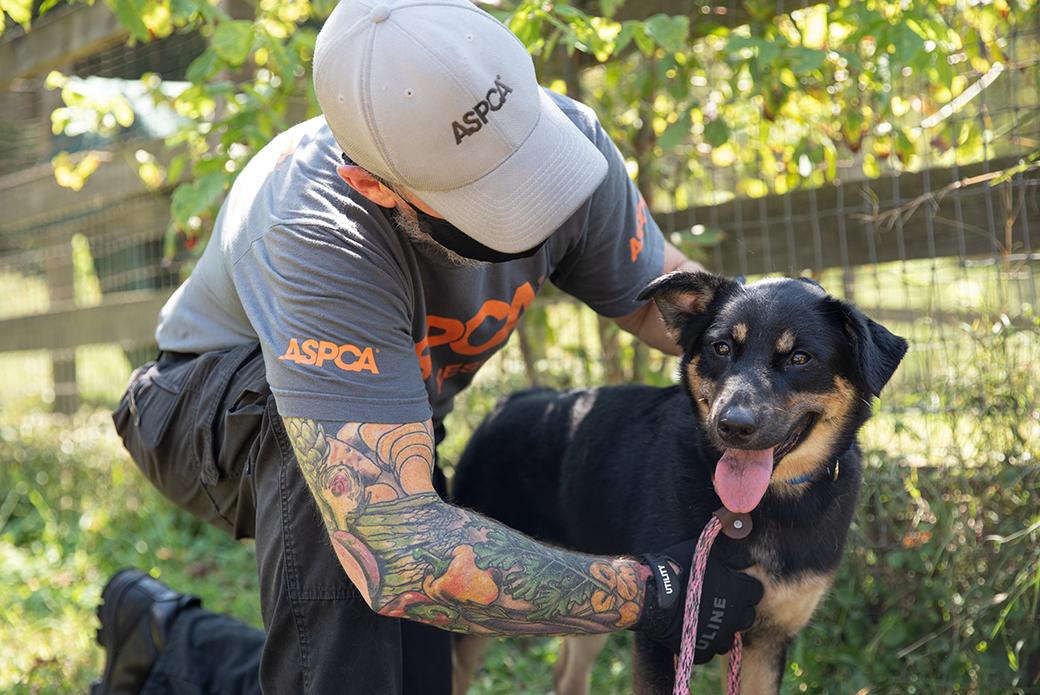 ASPCA rescued dog