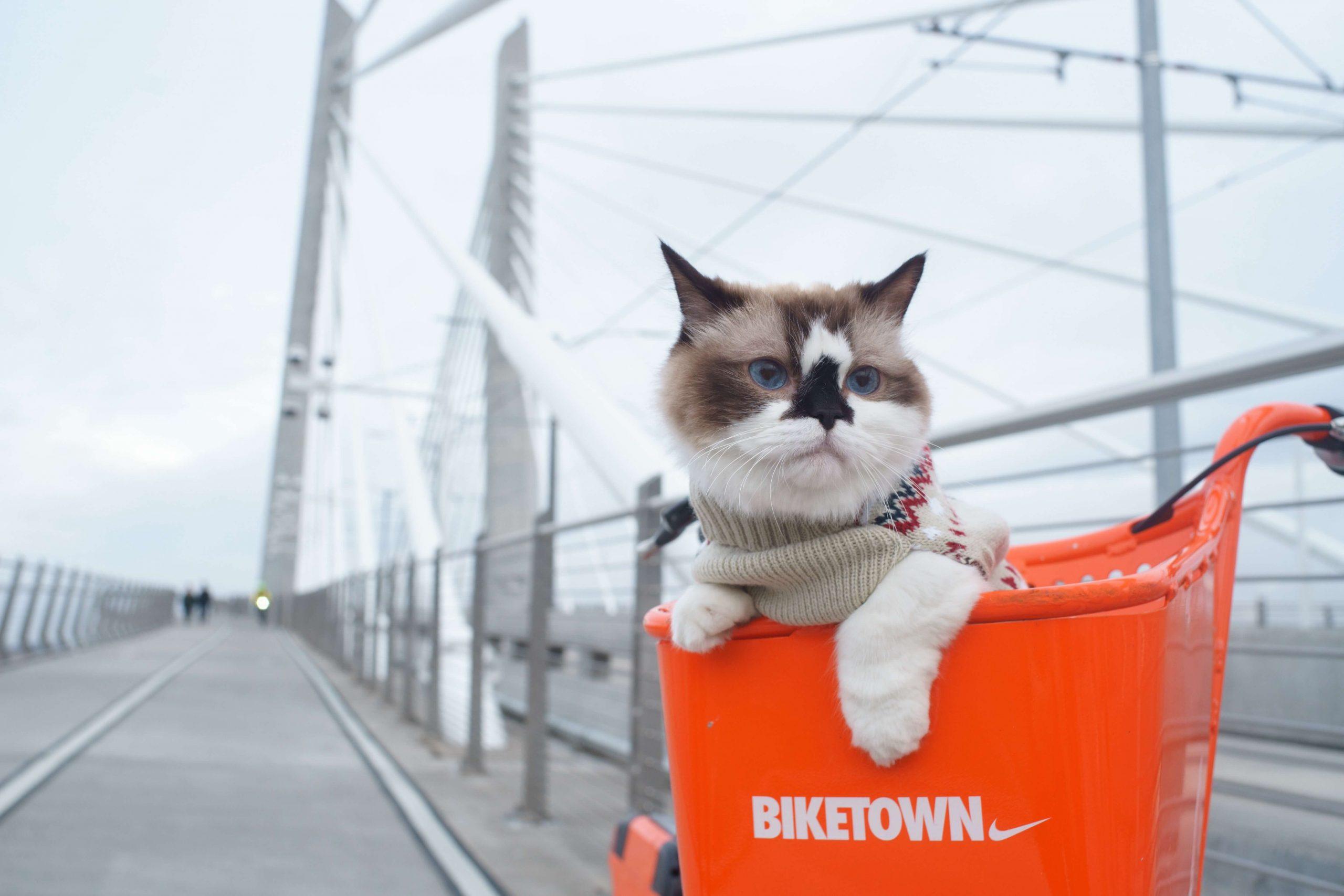 female-munchkin-cat-names