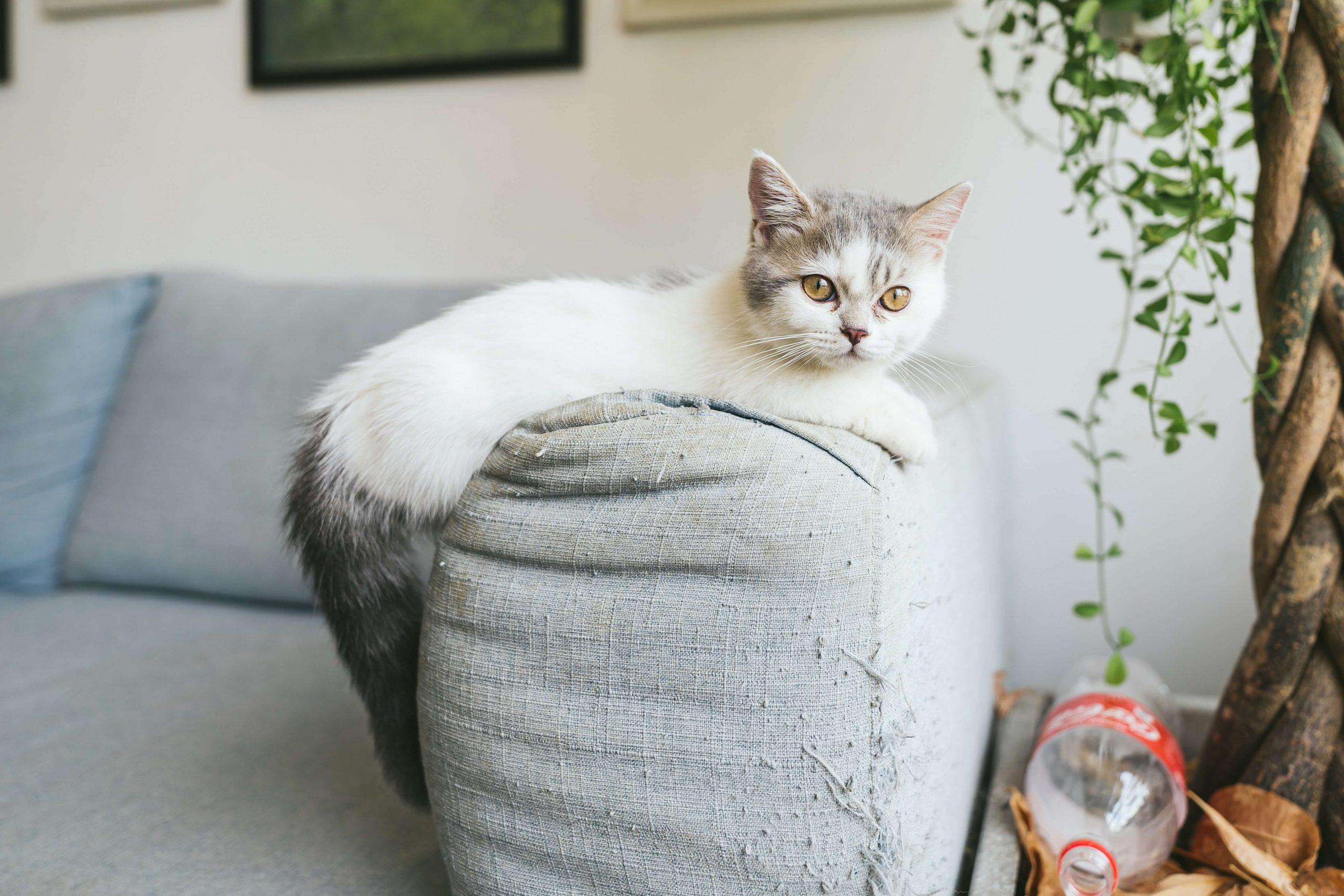 unisex-munchkin-cat-names