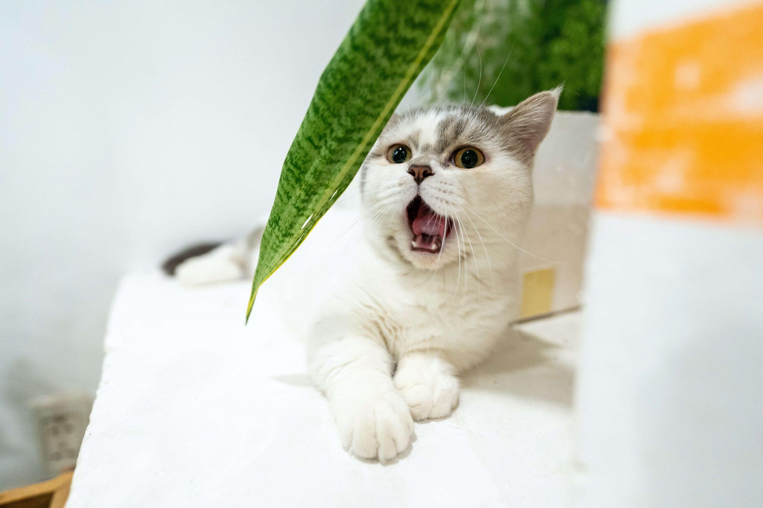 uncommon-munchkin-cat-names