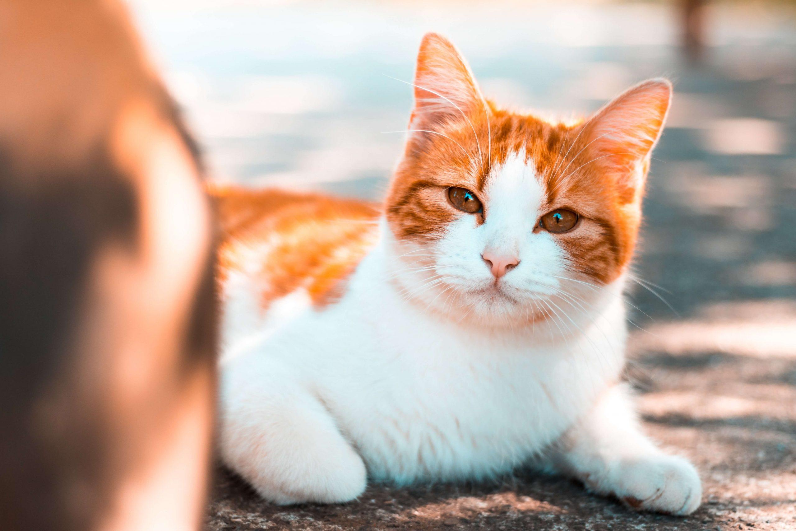 unique-munchkin-cat-names