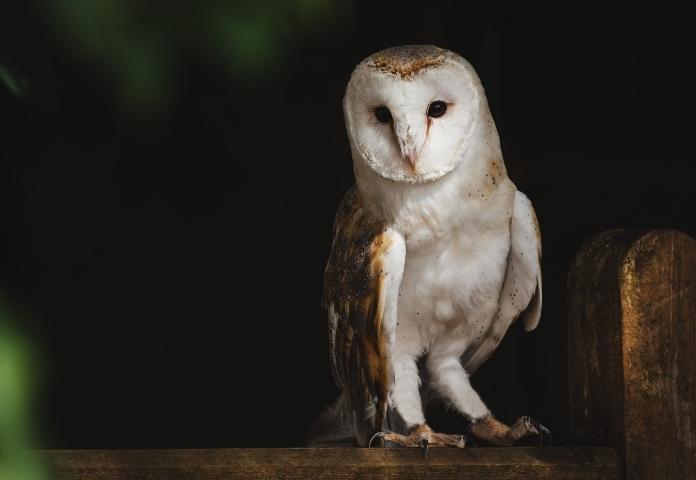 Origins of Scientific Names for Owls