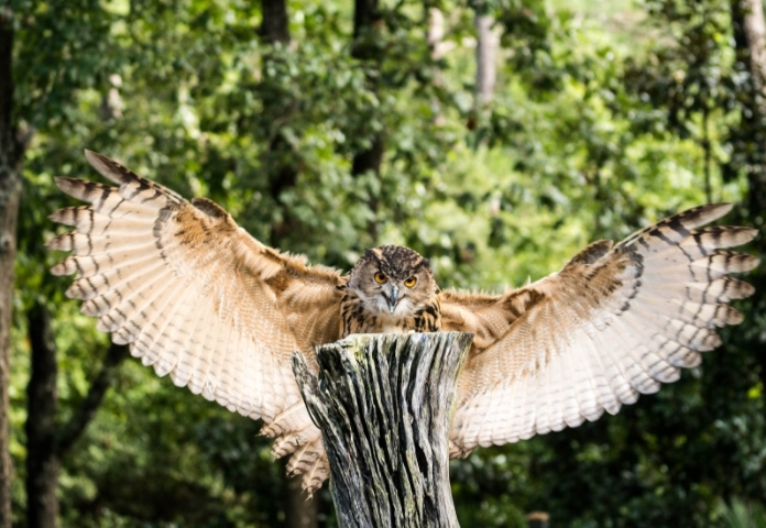 40+ Names Meaning Owl - List of Names from Different Languages