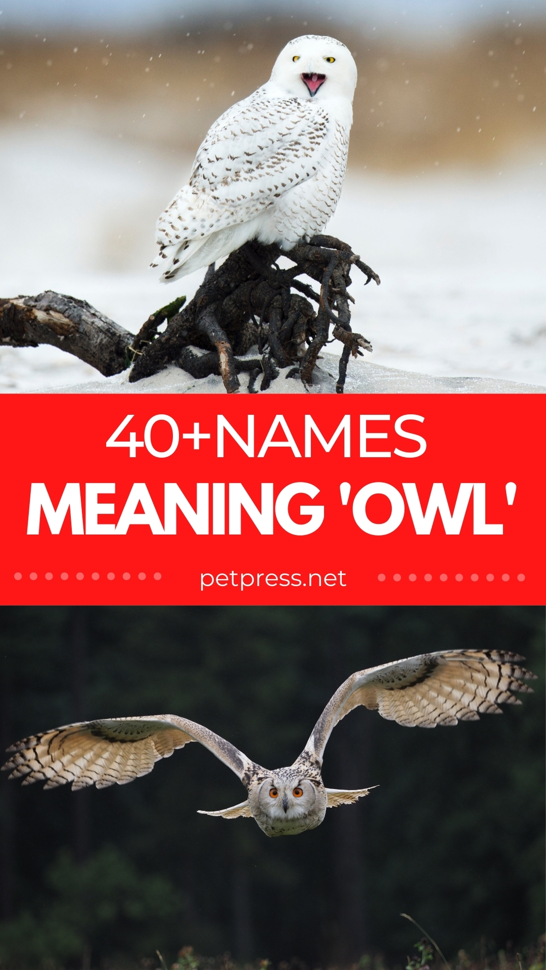 names meaning owl