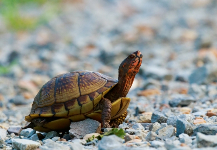 Funny Disney Names for Turtles