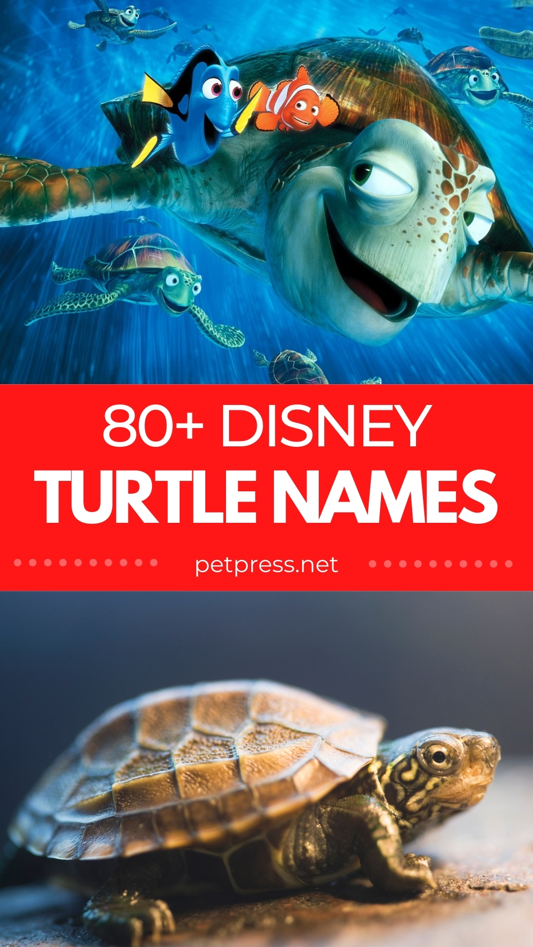 disney turtle names