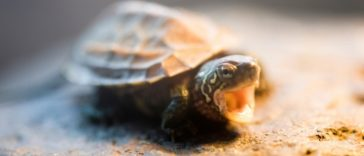 80+ Japanese Tortoise Names - Japanese Name Ideas for Your Pet