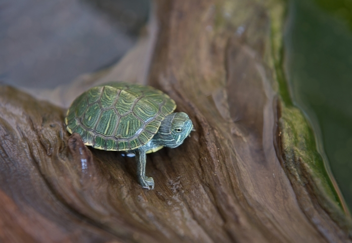 Male Japanese Names for a Tortoise