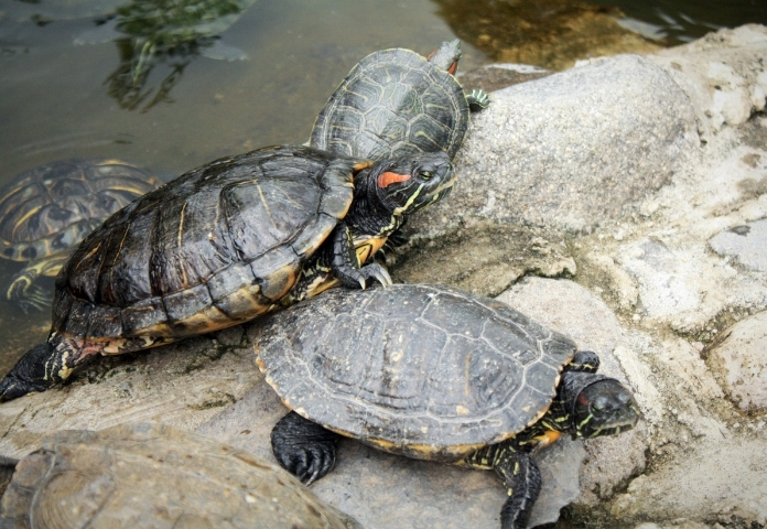Cute Japanese Tortoise Names