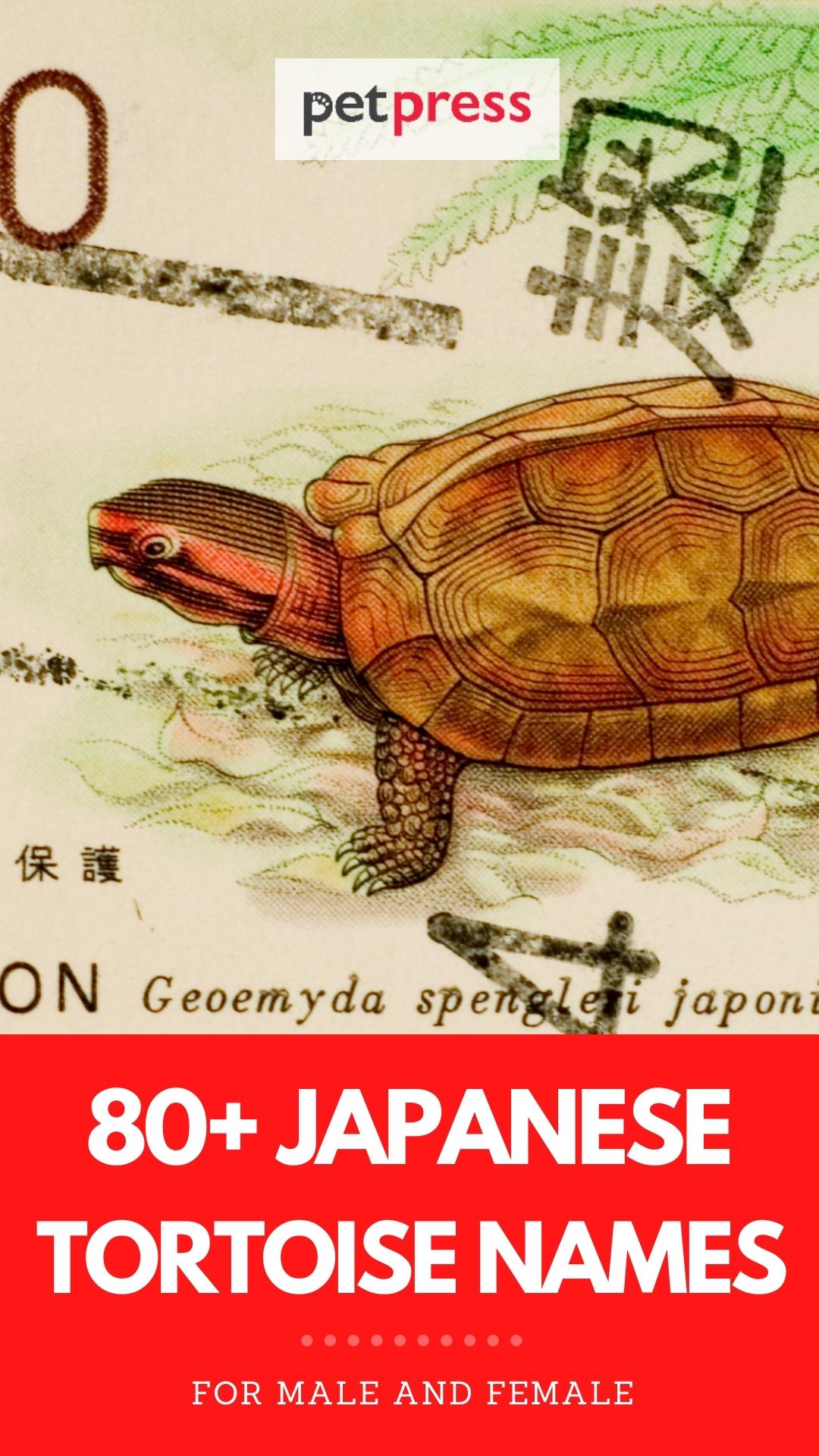 japanese tortoise names