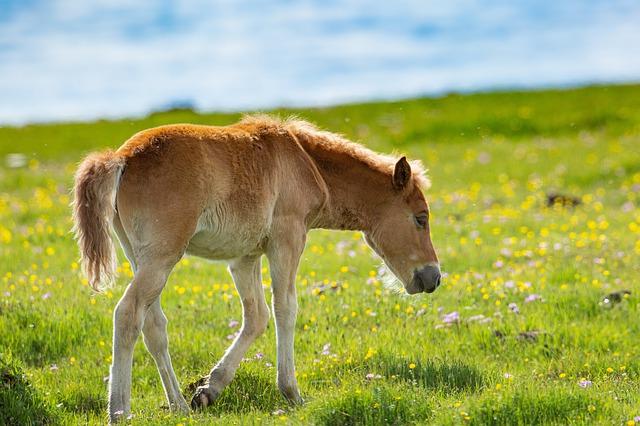 male-biblical-horse-names