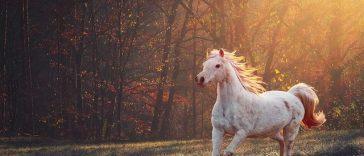 female-biblical-horse-names