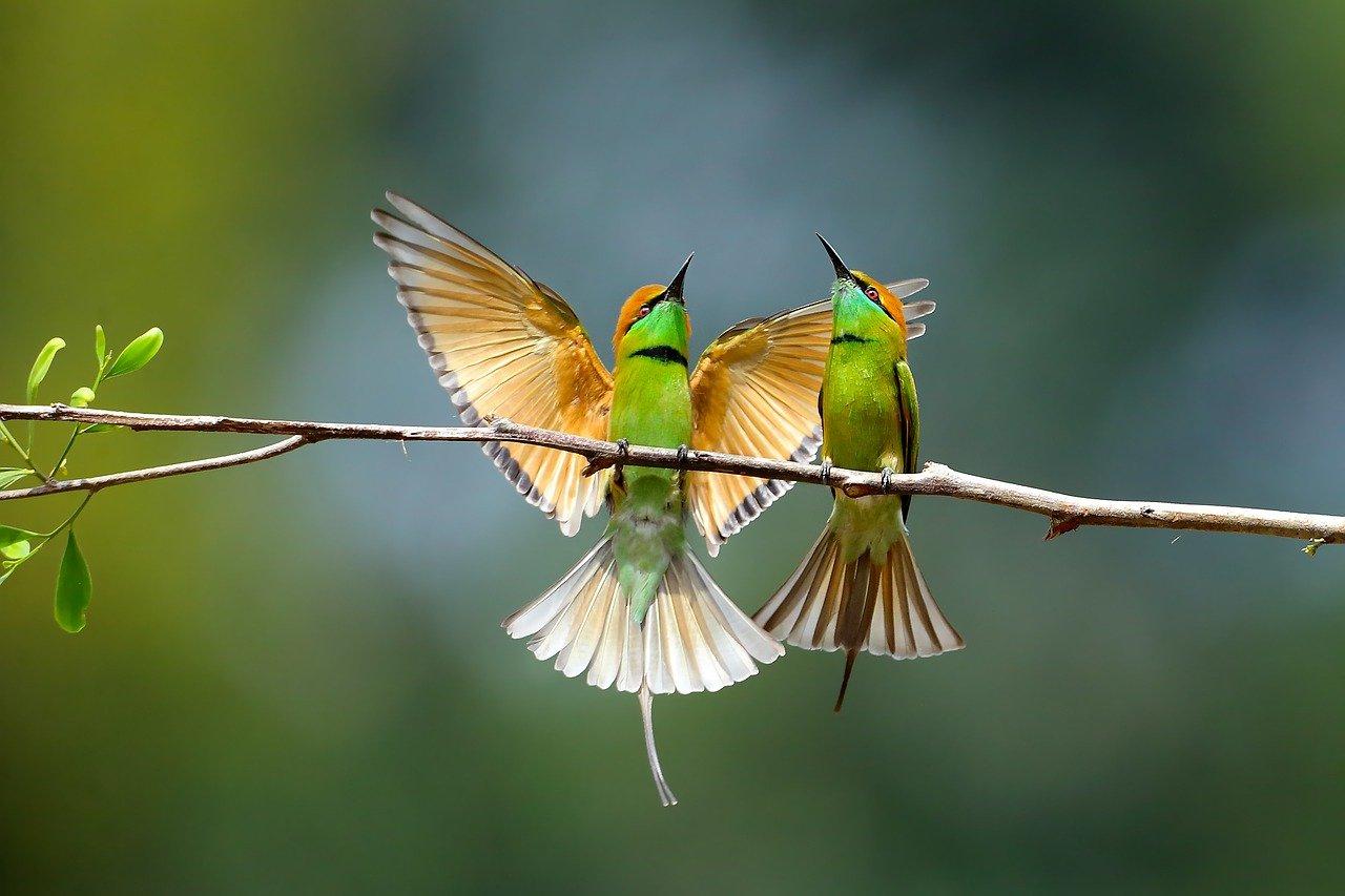 a-to-z-bird-names