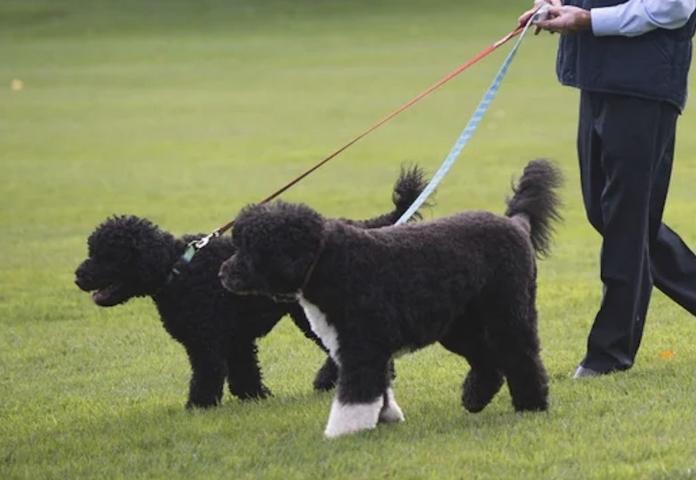 Bo, Sunny, and Barack Obama