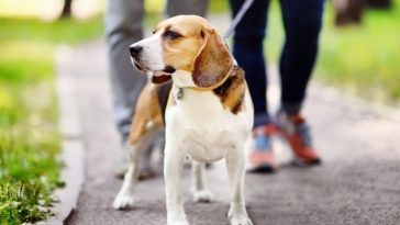 World's Largest Pet Walk 2021 - Annual Celebration for the Love of Pets