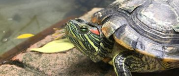 50 Funny and Punny Turtle Names That Will Make You Laugh!