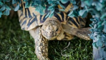 Top 130+ Indian Tortoise Names with Their Meanings