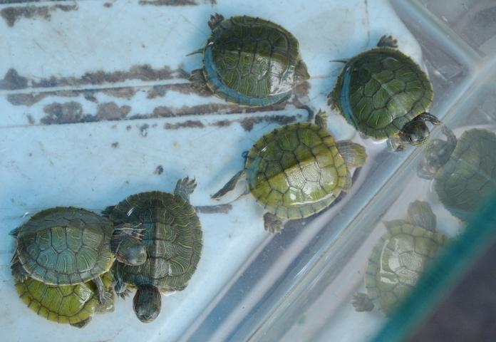 Tortoise Names in Tamil
