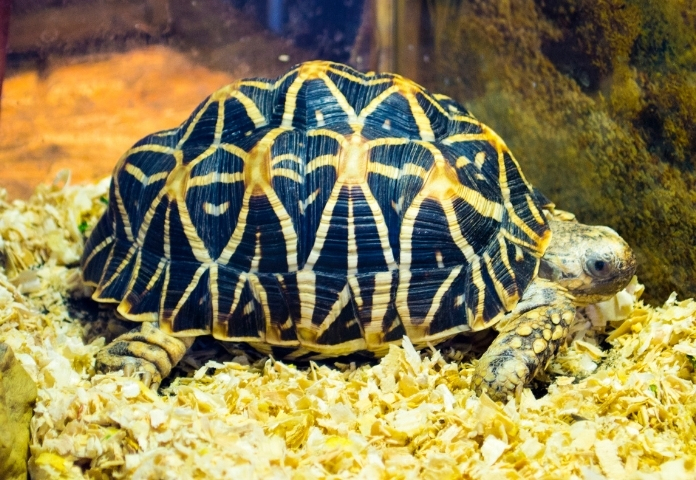 Tortoise names in Malayalam