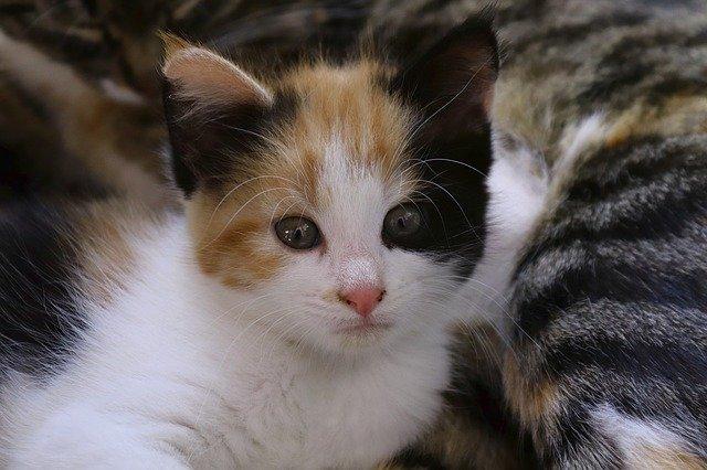female-cat-names
