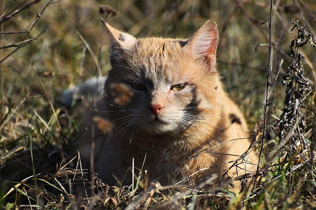 male-haitian-cat-names