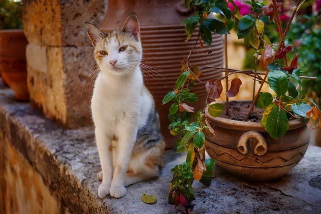 unique-haitian-cat-names